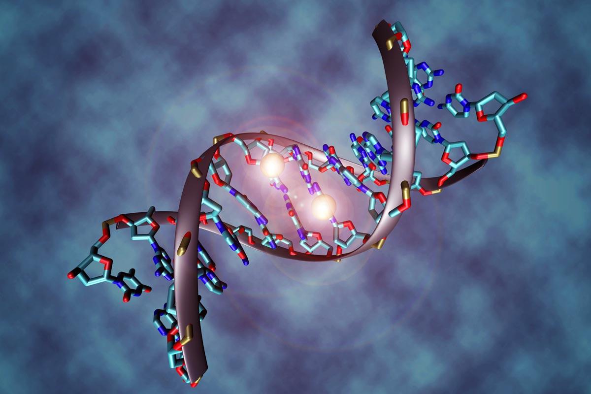 DNA Methylierung, DNA-Molekül