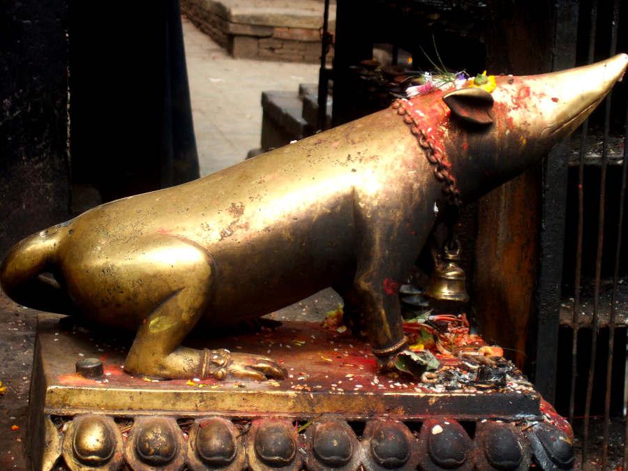 Statue einer heiligen Ratte in Patan, Nepal
